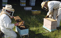 Staff check out bee hives.