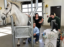 Horse getting ultrasound