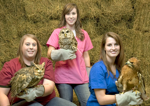 Wildlife Care Clinic